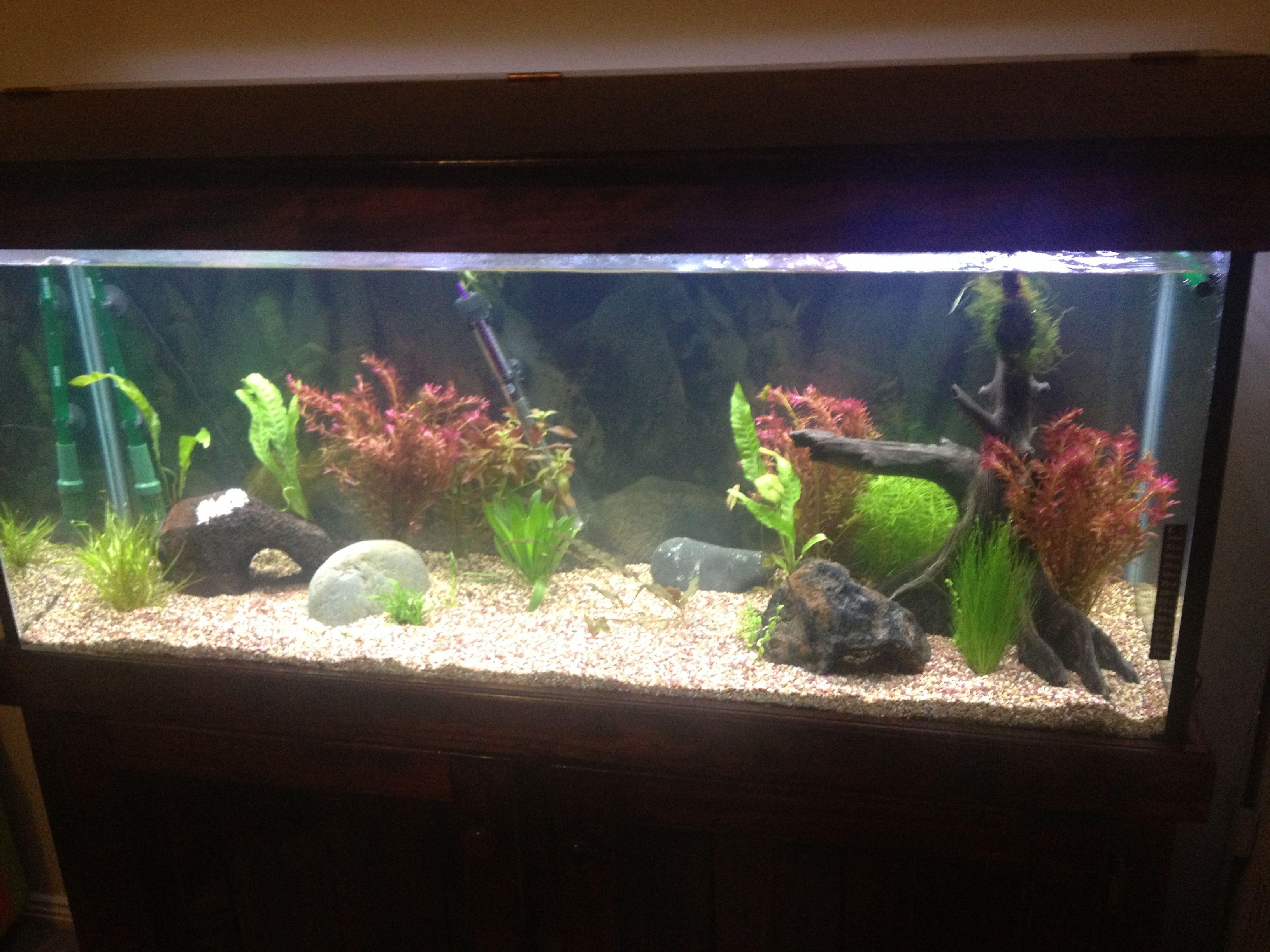 Fish Tanks My New 200L Tank