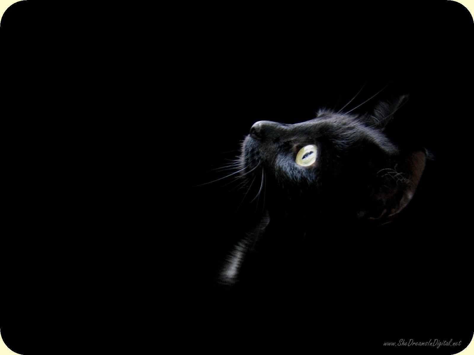 Cat mouse pad 1299 cat wallpaper black cat