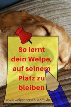 Hund Beibringen Auf Seinem Platz Zu Bleiben Hunde Welpen Erziehung Hunde Und Welpen