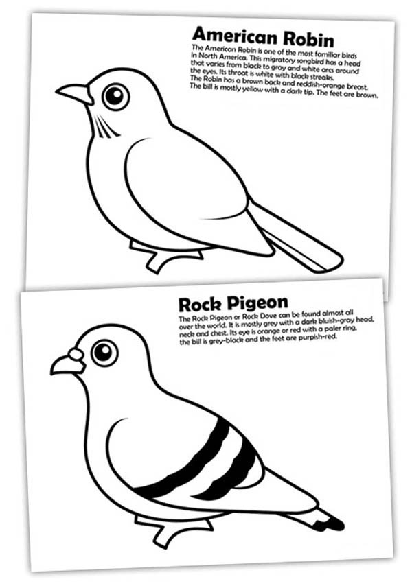 Diffrence Of American Robin And Rock Pigeon Coloring Page Download Print Online Coloring Pages For Online Coloring Pages Coloring Pages Owl Coloring Pages