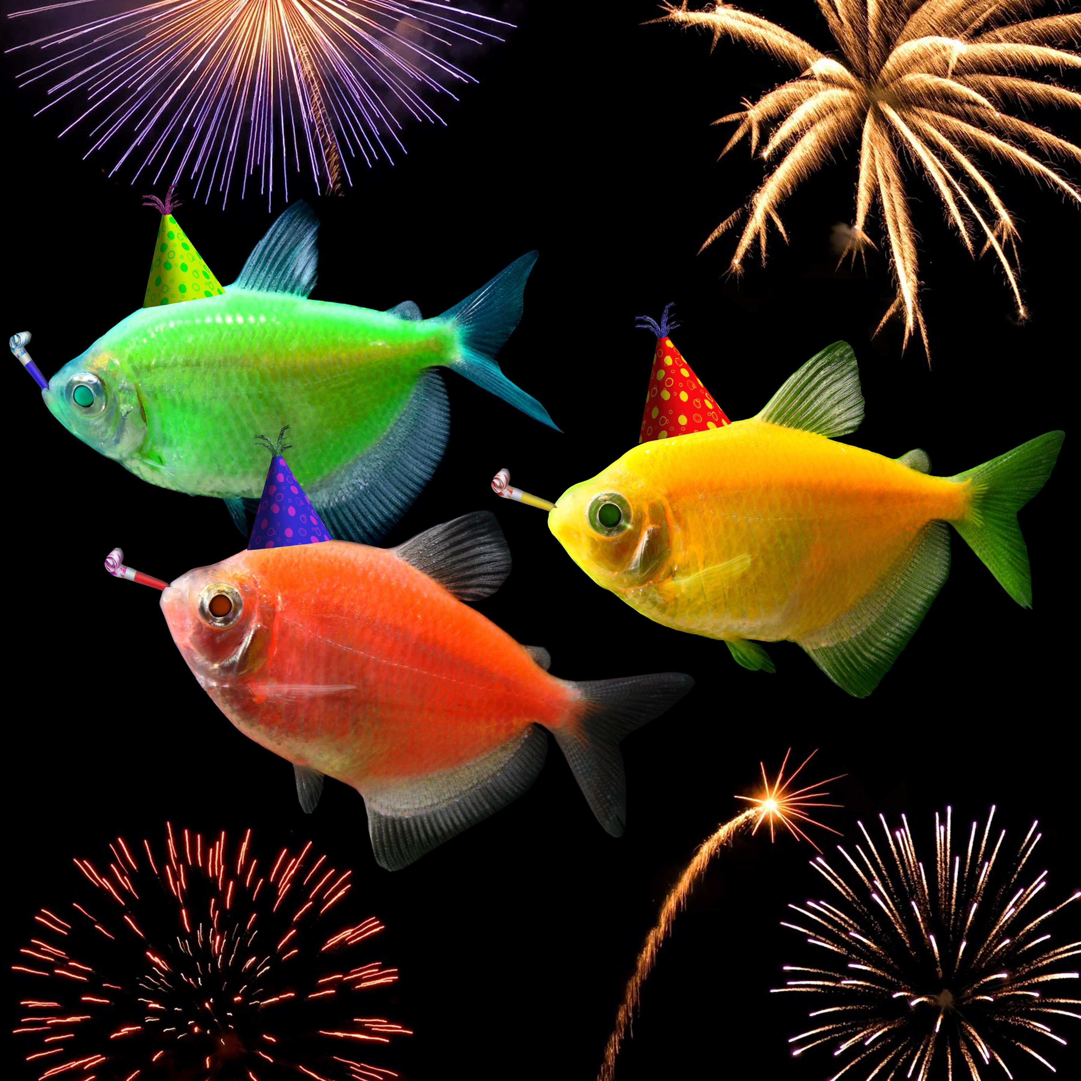 Happy New Year from the GloFish team Meet GloFish