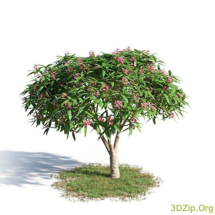 3d model Tree 1 free download | Decoration | Model tree