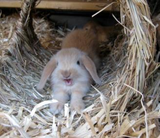 Zwergwidder Kaninchen NHD Startseite … Zwergwidder