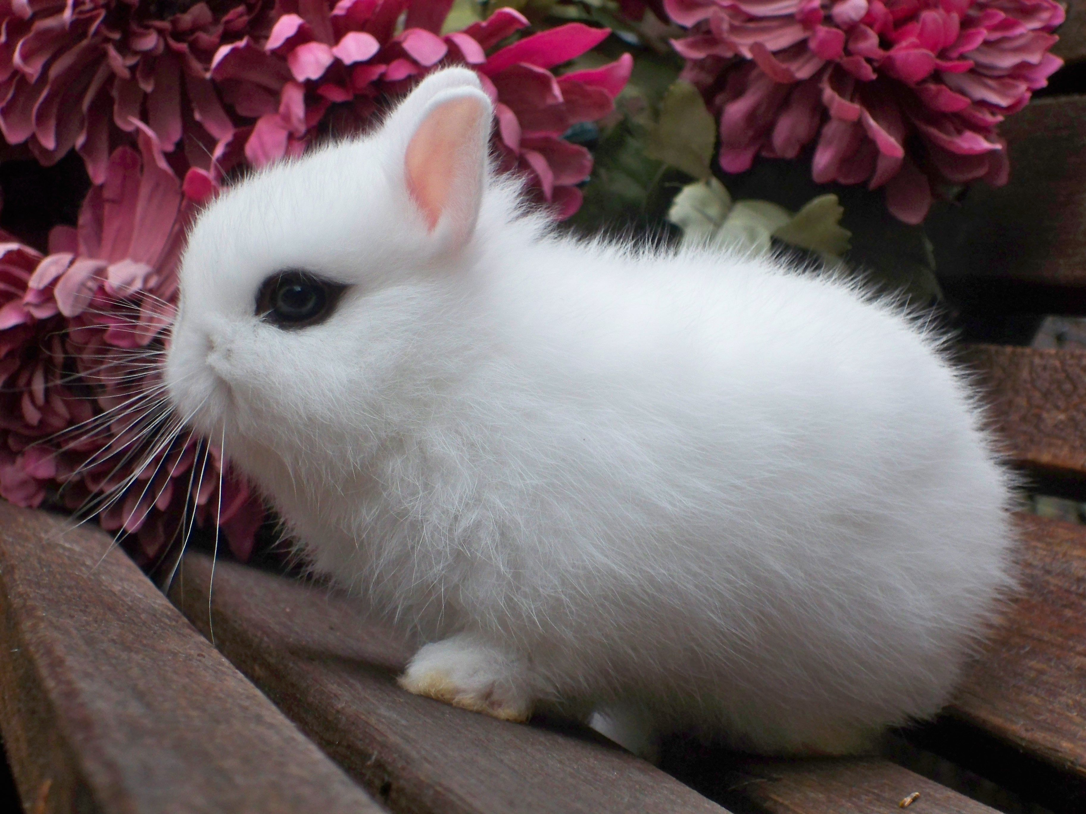 Rabbit is a gray giant. Breeds of rabbits: description and photo