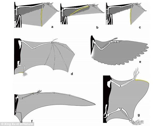 Dinosaur With Wings Like A Bat Found In China Flying Squirrel