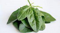 Špenát - malý zelený zázrak, i když se Pepek zmýlil.