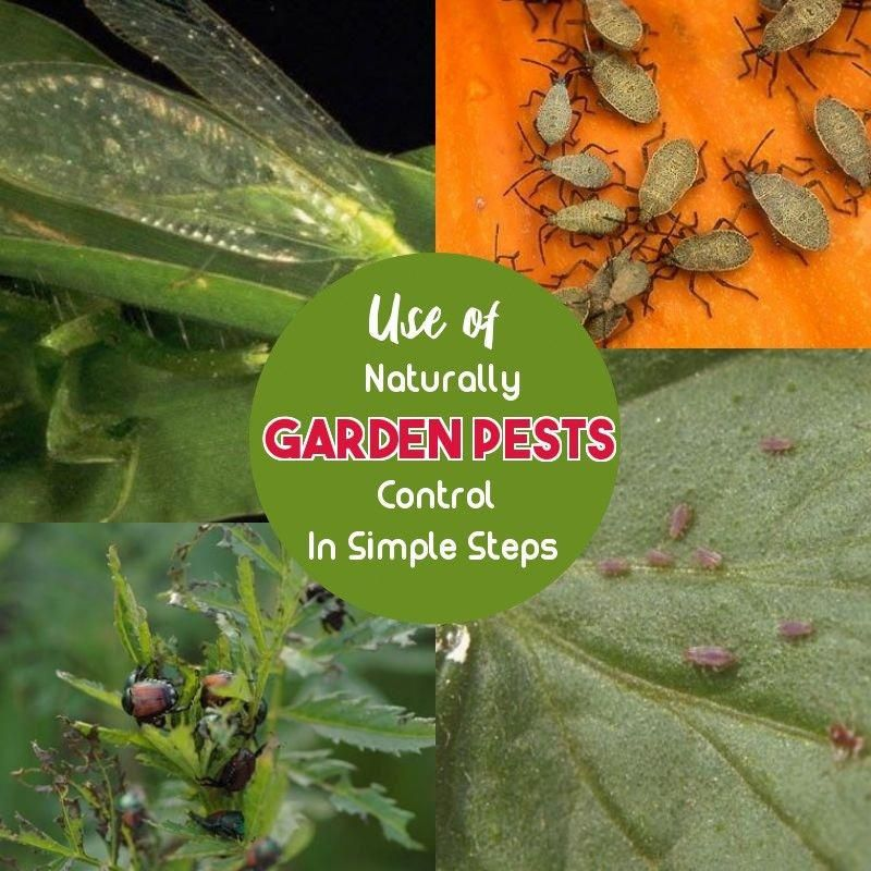 Natural Pest Control Is Very Beneficial To Your Garden, In