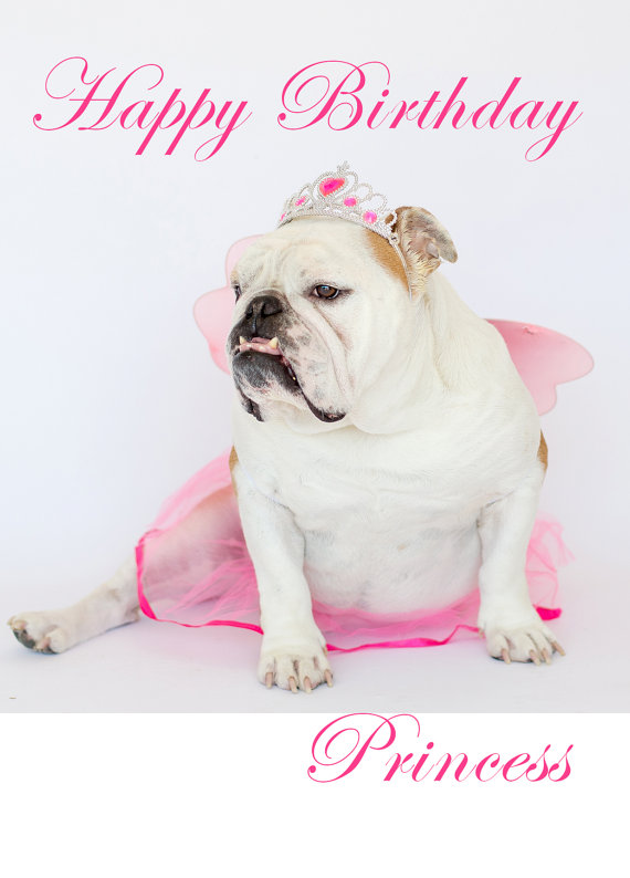 Happy Birthday Princess English Bulldog Card Fine Art Photography