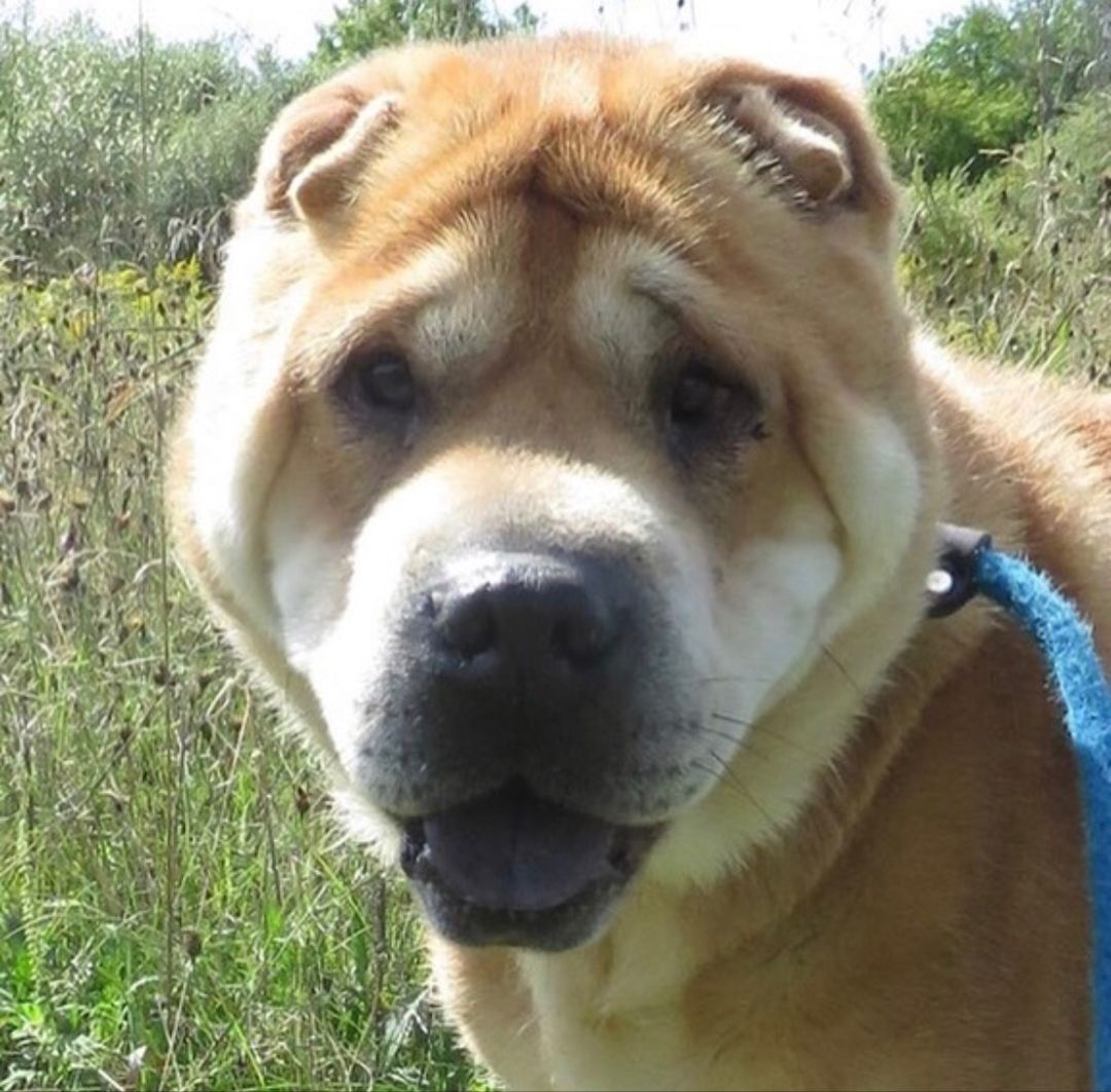 Rosie was surrendered to the shelter when her owner had