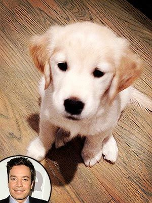 Jimmy Fallon Gets New Puppy People Com Miss My Dog Puppies