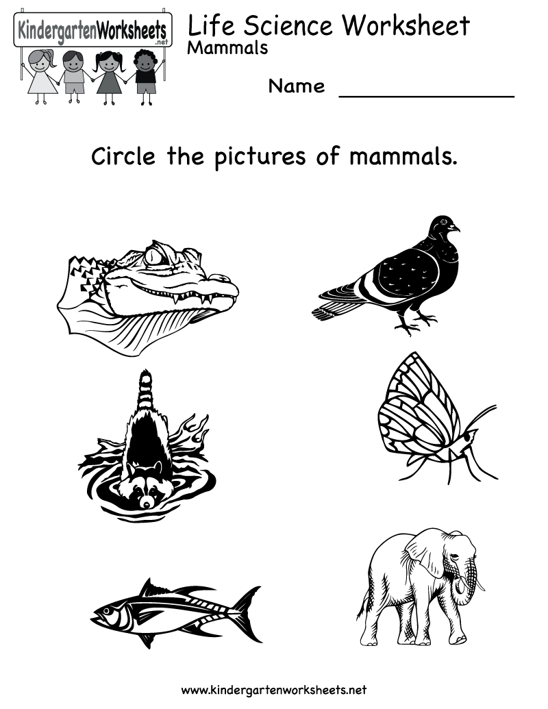 Mammals Or Not Science Printable For Kindergarten On Mammals – Science Worksheet for Kindergarten