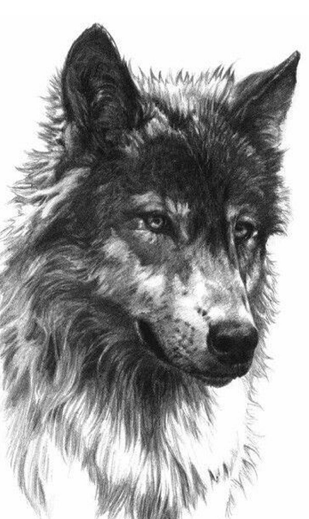 b74bb6872 Lone Wolf   Animalz: Wolves   Wolf tattoos, Wolf painting, Wolf