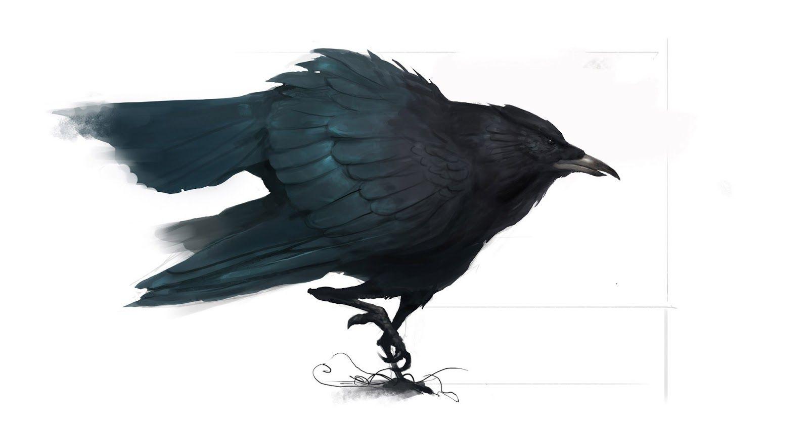 Muy linda #ilustracion de un cuervo de Coles Hole