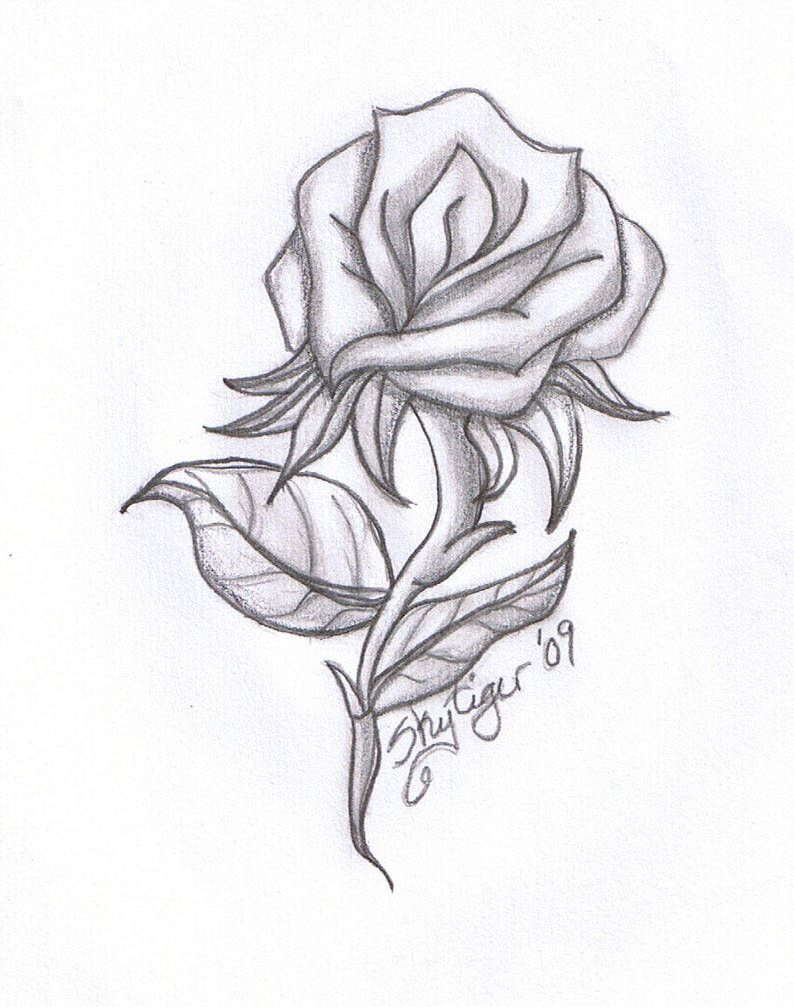 Rose Pencil Drawing By Skytiger Roses Drawing Pencil Drawings
