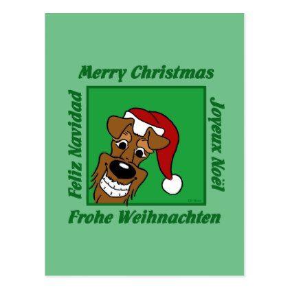 Irish Terrier Christmas Postcard Irish terrier