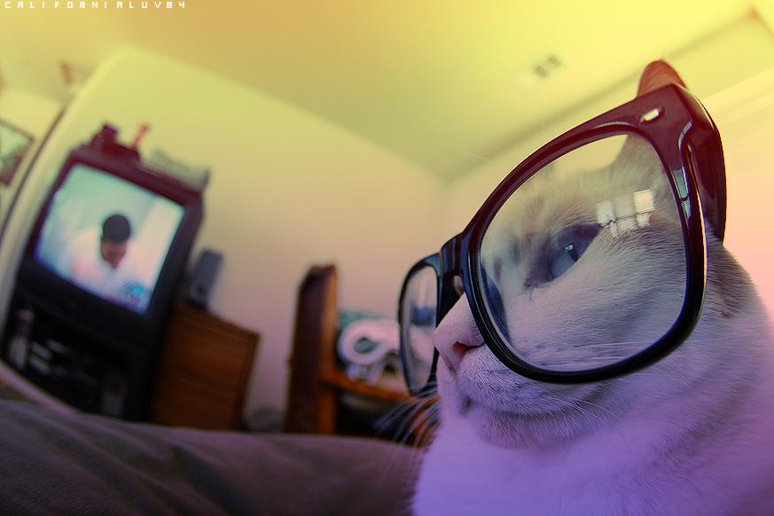 californialuv84:    Sylvester. My cat. :3