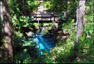 paradise springs (privately owned) diving spot | Springs | Florida
