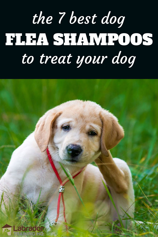 7 Best Dog Flea Shampoos To Treat Your Dog Flea Shampoo For Dogs