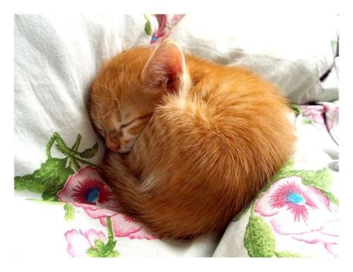 A Sleeping Kitten Tiny And Cute Cute Cats Cute Animals Pretty Cats
