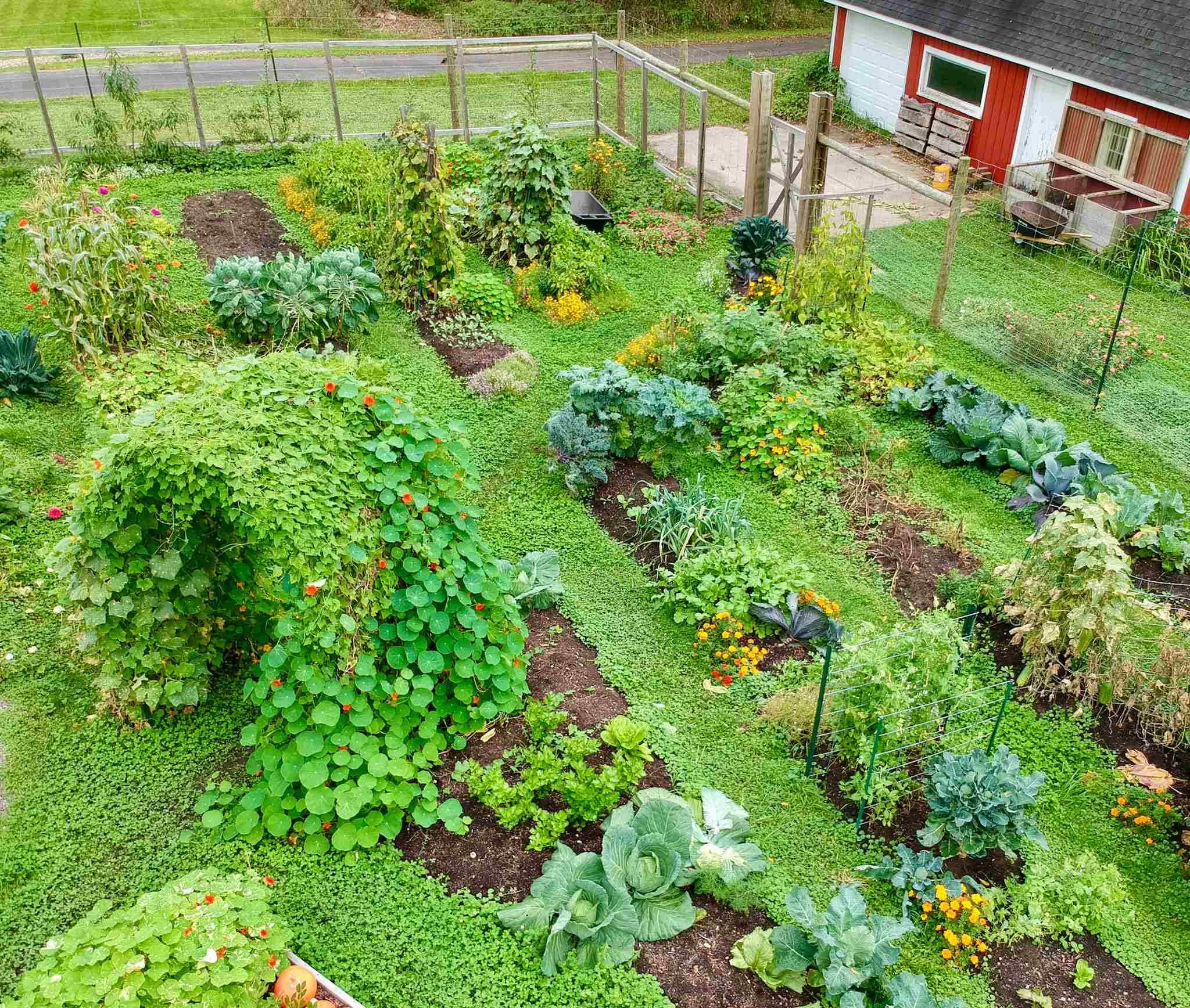 Pros And Cons Of Community Gardens
