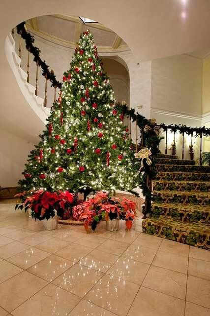 Christmas Tree Reflection Pictures Pinterest Reflection pictures