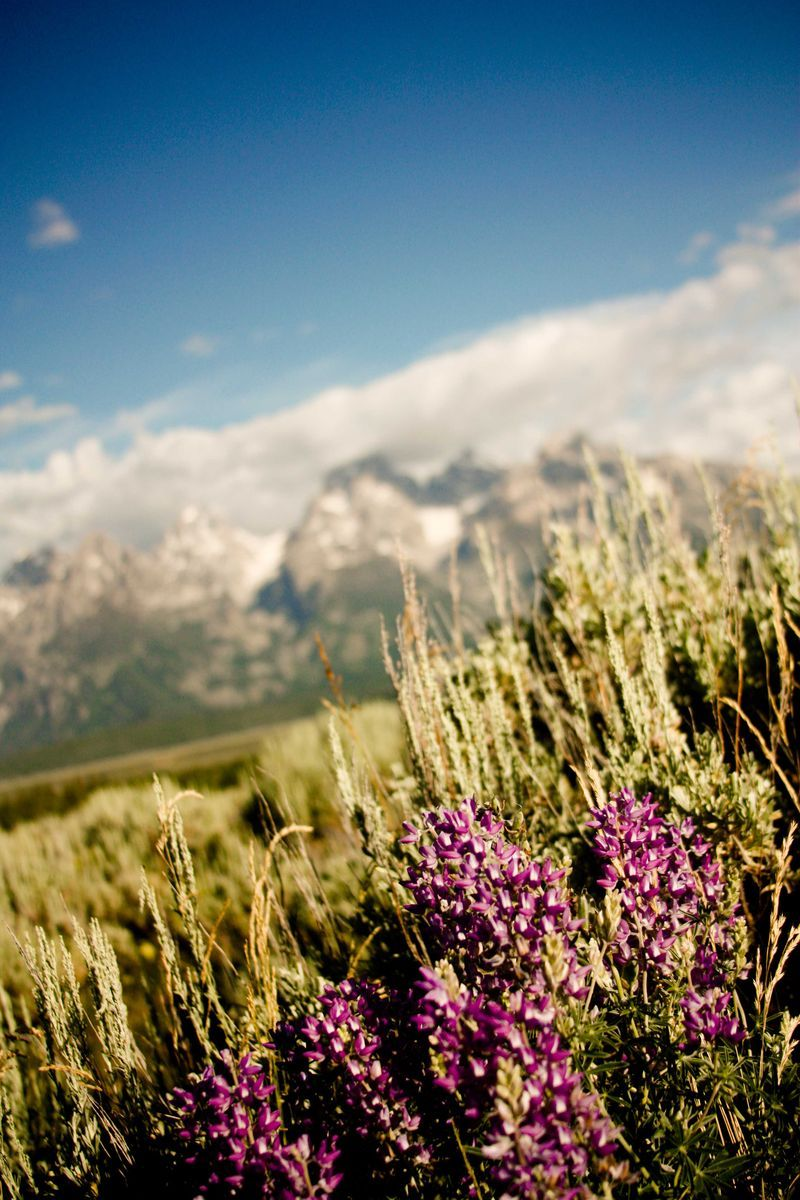flowers and mountains = happiness
