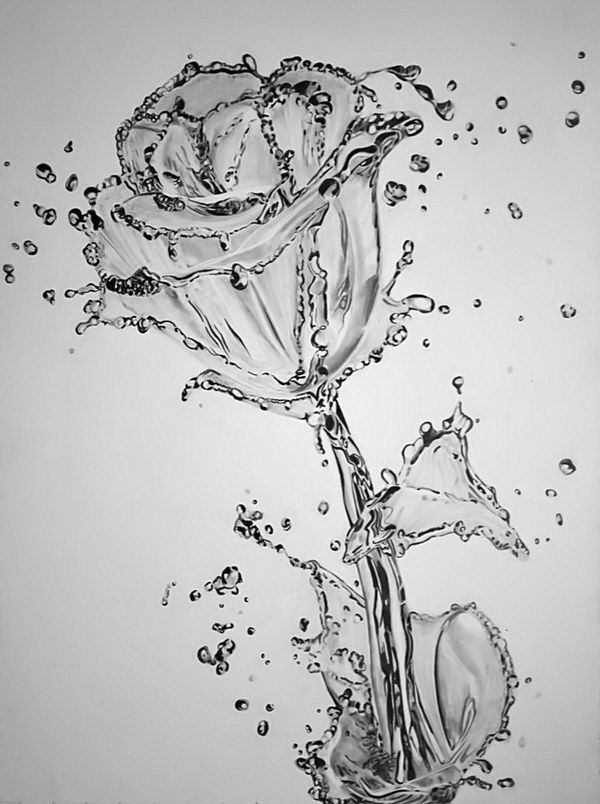 Water flower by paul shanghai amazing pencil drawing