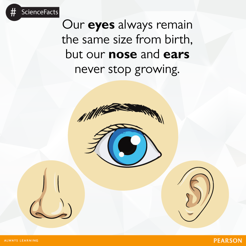 Our eyes remain the same in size throughout our life but our ears ...