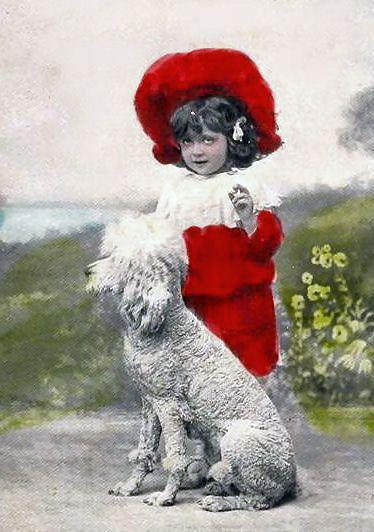 1907whitepoodle.jpg (374×532)