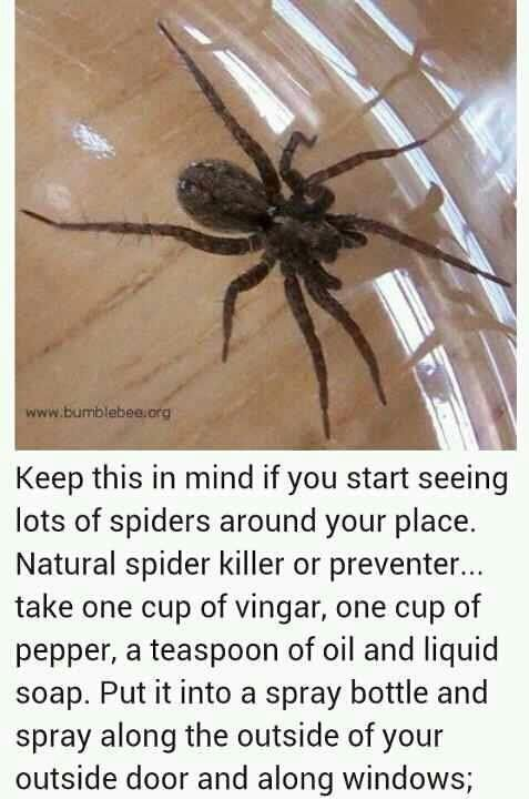 Home Made Spider Repellent For The House