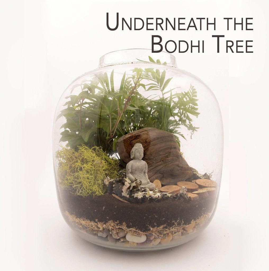 Underneath The Bodhi Tree Plant Terrarium Nyc Local Only By Twig