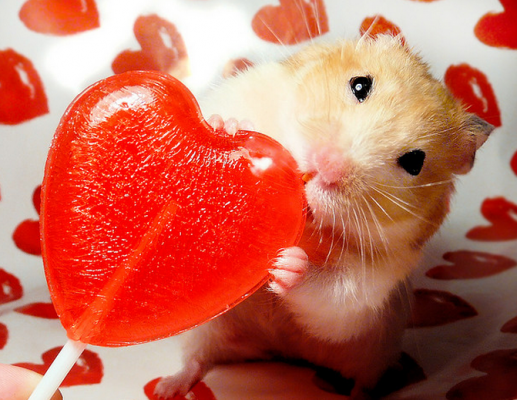 Gallery Cute Animals Licking Lollipops For National