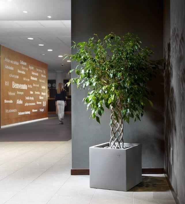 Lyxo by Veca - Bac à arbre élégant et parfait pour vos plantes - de ...