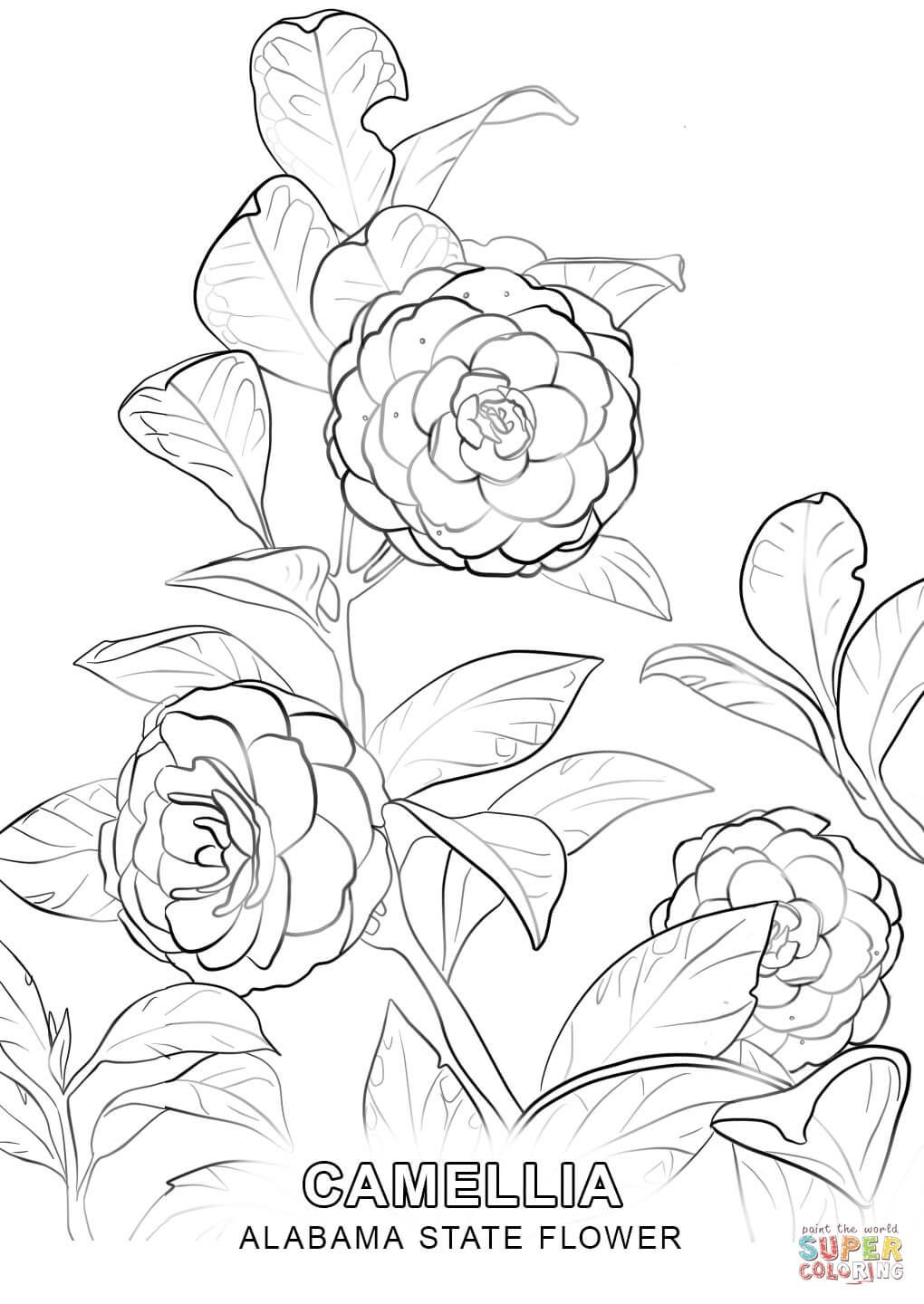 alabama state flower topsimages Virginia State Capitol alabama state flower coloring page free printable coloring pages 1020x1440 alabama state flower