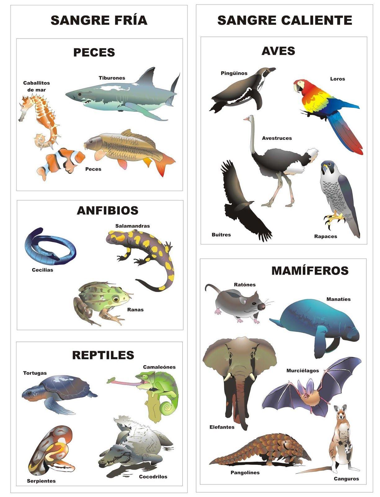 Imágenes de animales vertebrados para imprimir   Material para ...