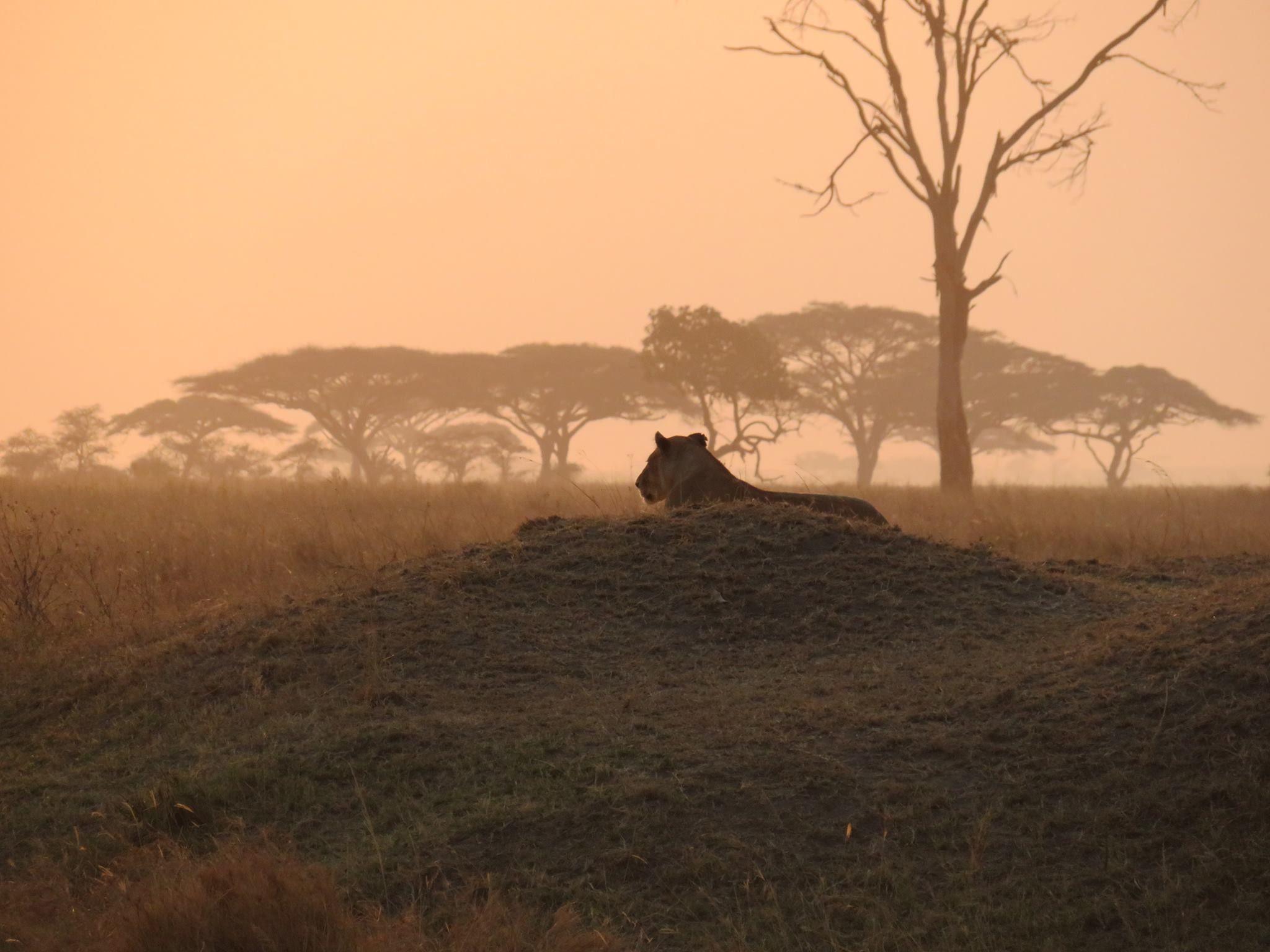 Serengeti @Tanzania
