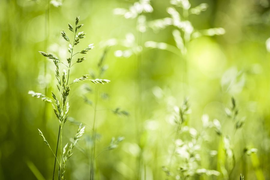 Spring Photos - Photograph June green grass flowering by Elena Elisseeva on 500px
