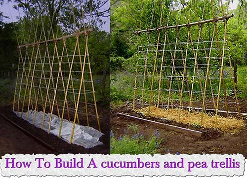 How To Build A Cucumbers And Pea Trellis Amazing Ideas