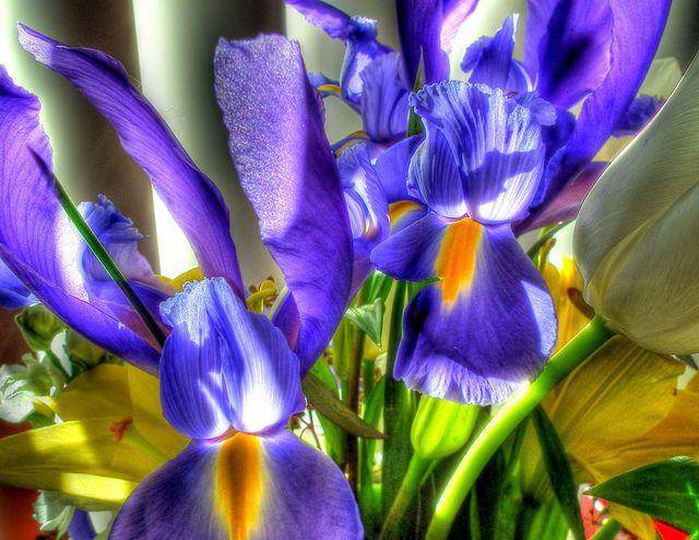 Pin de Fresh Produce em Amazing Flowers   Jardinagem