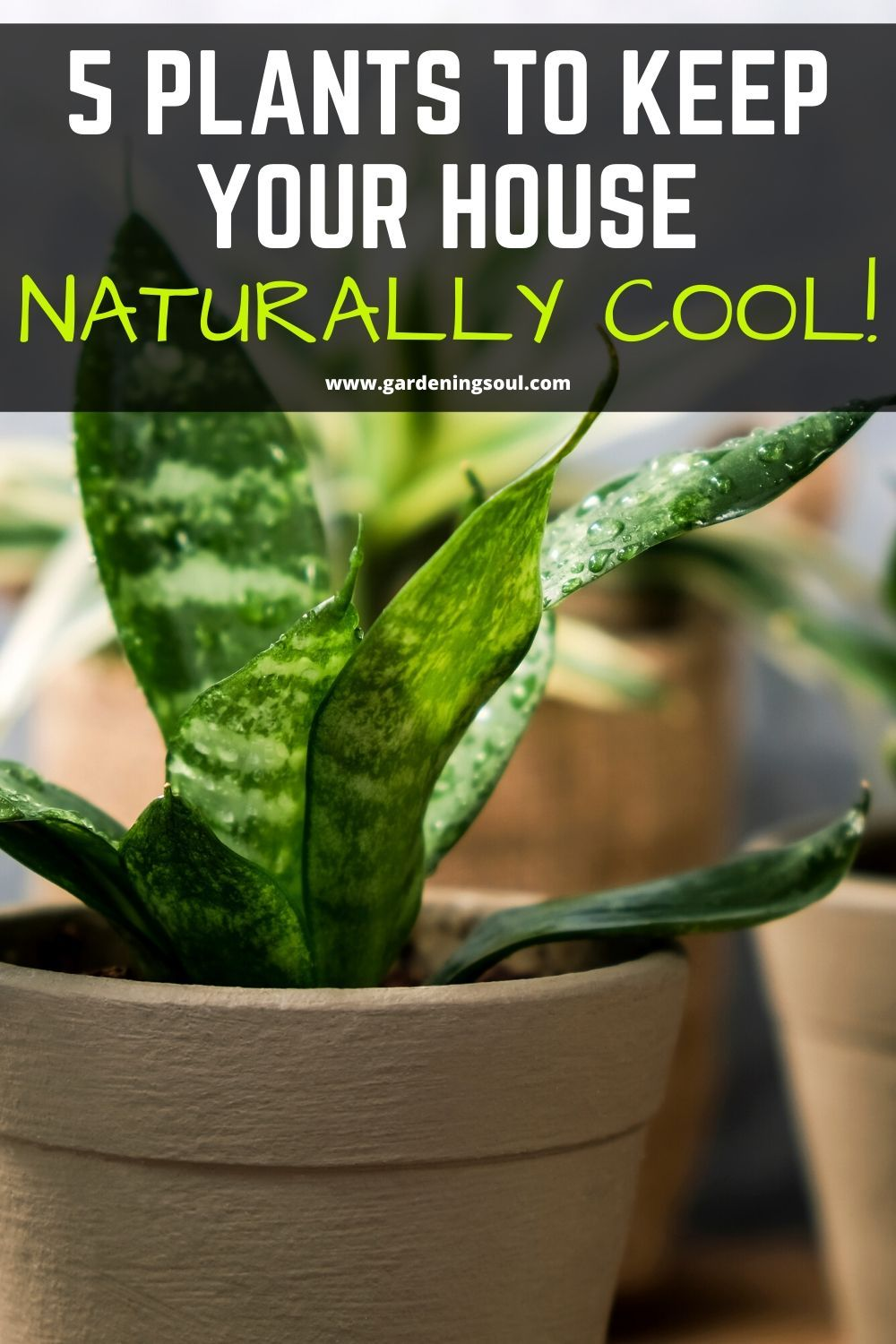 5 Plants to Keep Your House Naturally Cool! in 2020