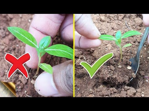 20 THINGS YOU ARE DOING IT WRONG IN GARDENING – Unknowingly? - YouTube