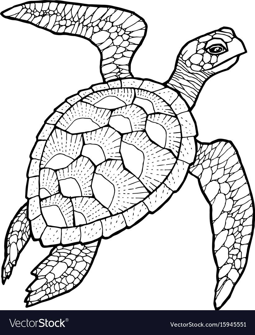 Sea Turtle Line Art Vector Stylized Drawing Download A Free Preview Or High Quality Adobe Illustrato Turtle Drawing Turtle Coloring Pages Sea Turtle Drawing