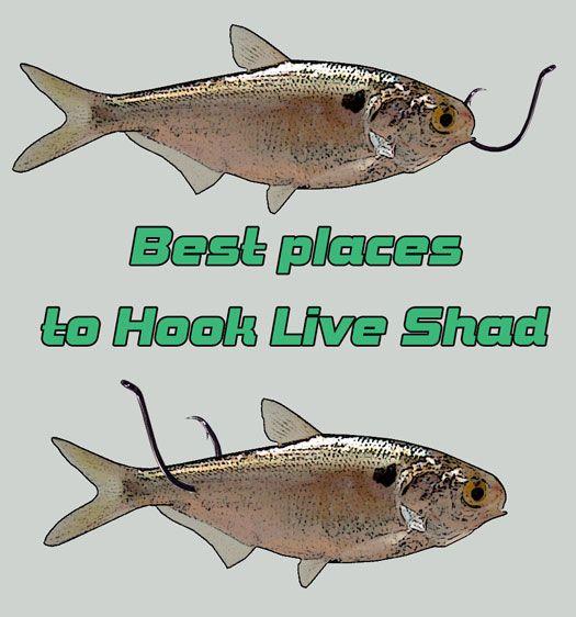 How To Catch Catfish Catfish Bait Catfish Fishing Catfish