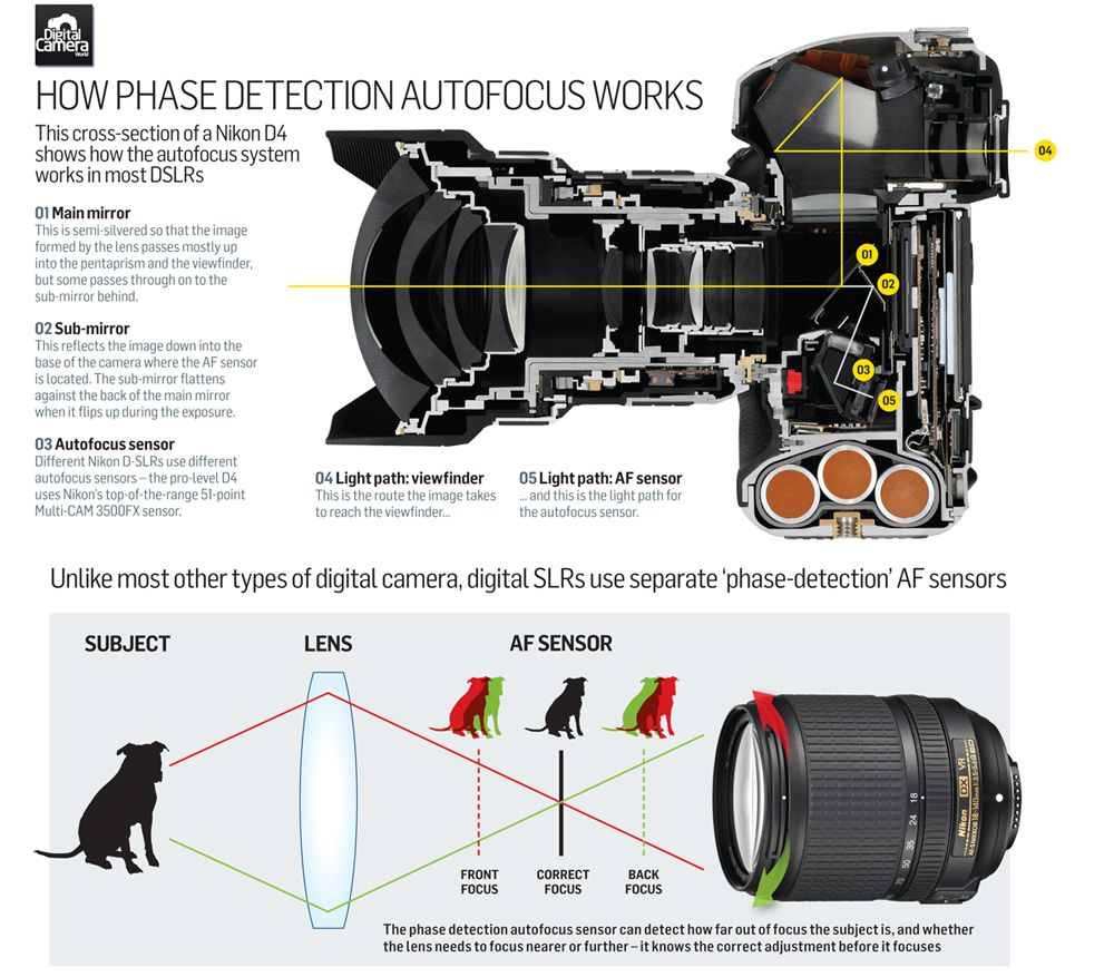 How Does Your Dslr Auto Focus Actually Work Photography