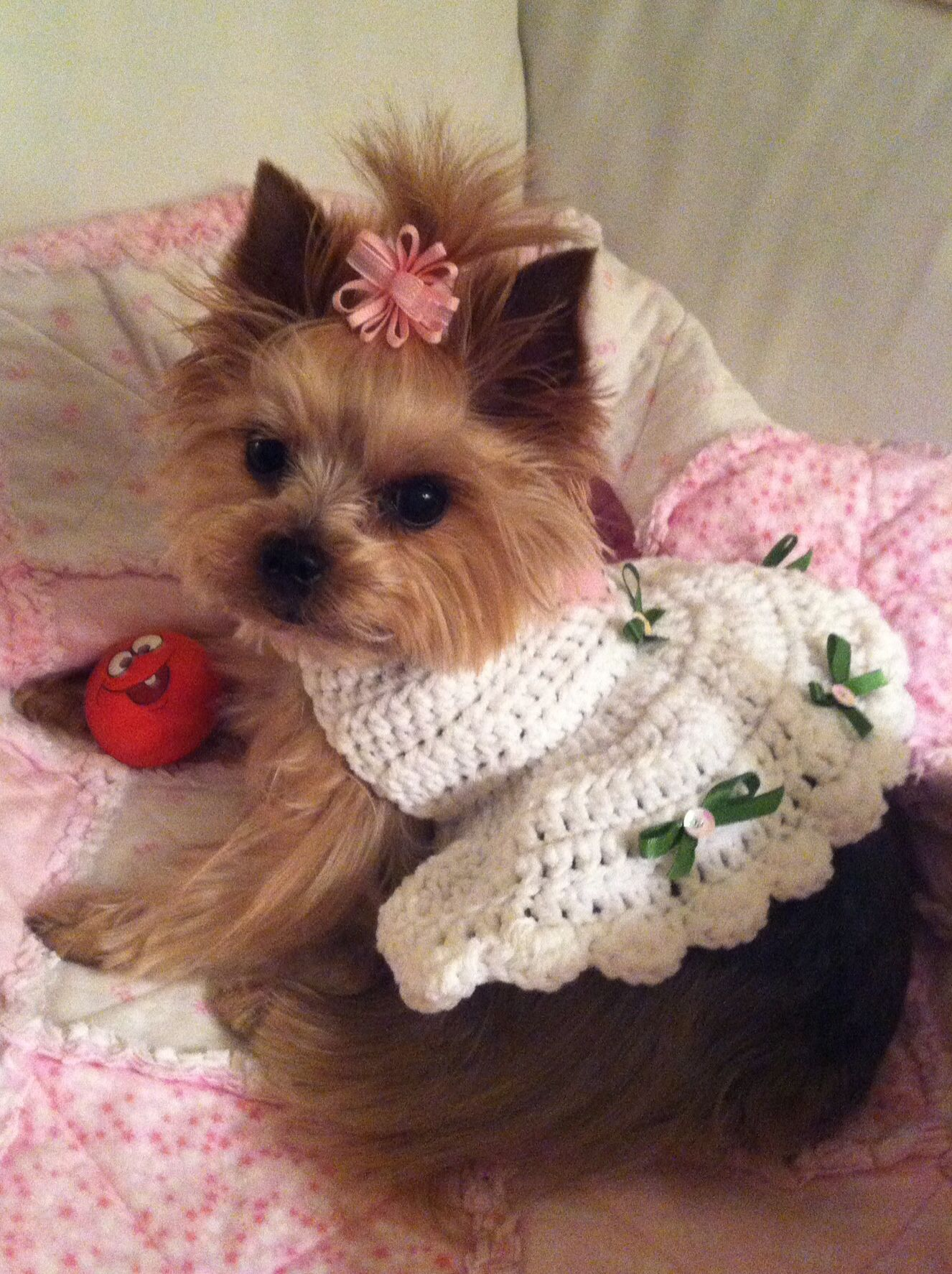 Pin by christian crystals on yorkies yorkie dogs yorkie
