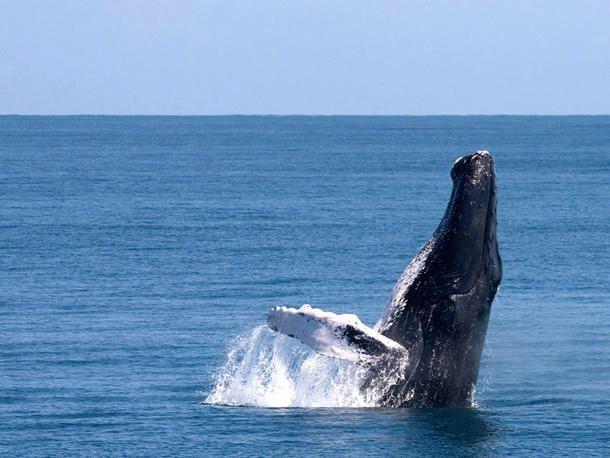 Samana Republica Dominicana Whale Samana Whale Watching