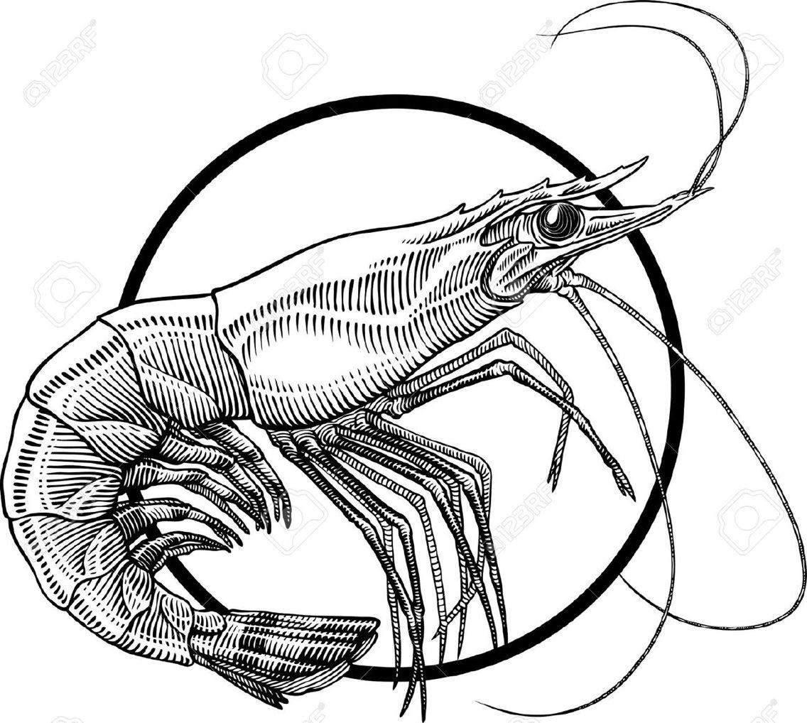pin by elizabeth meche on art pinterest illustrators sketches rh pinterest co uk Cooked Shrimp Clip Art Cooked Shrimp Clip Art