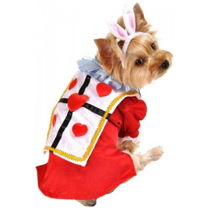White Rabbit Dog Costume - Extra Small  sc 1 st  Pinterest & White Rabbit Dog Costume - Extra Small | Brands/Distributors ...