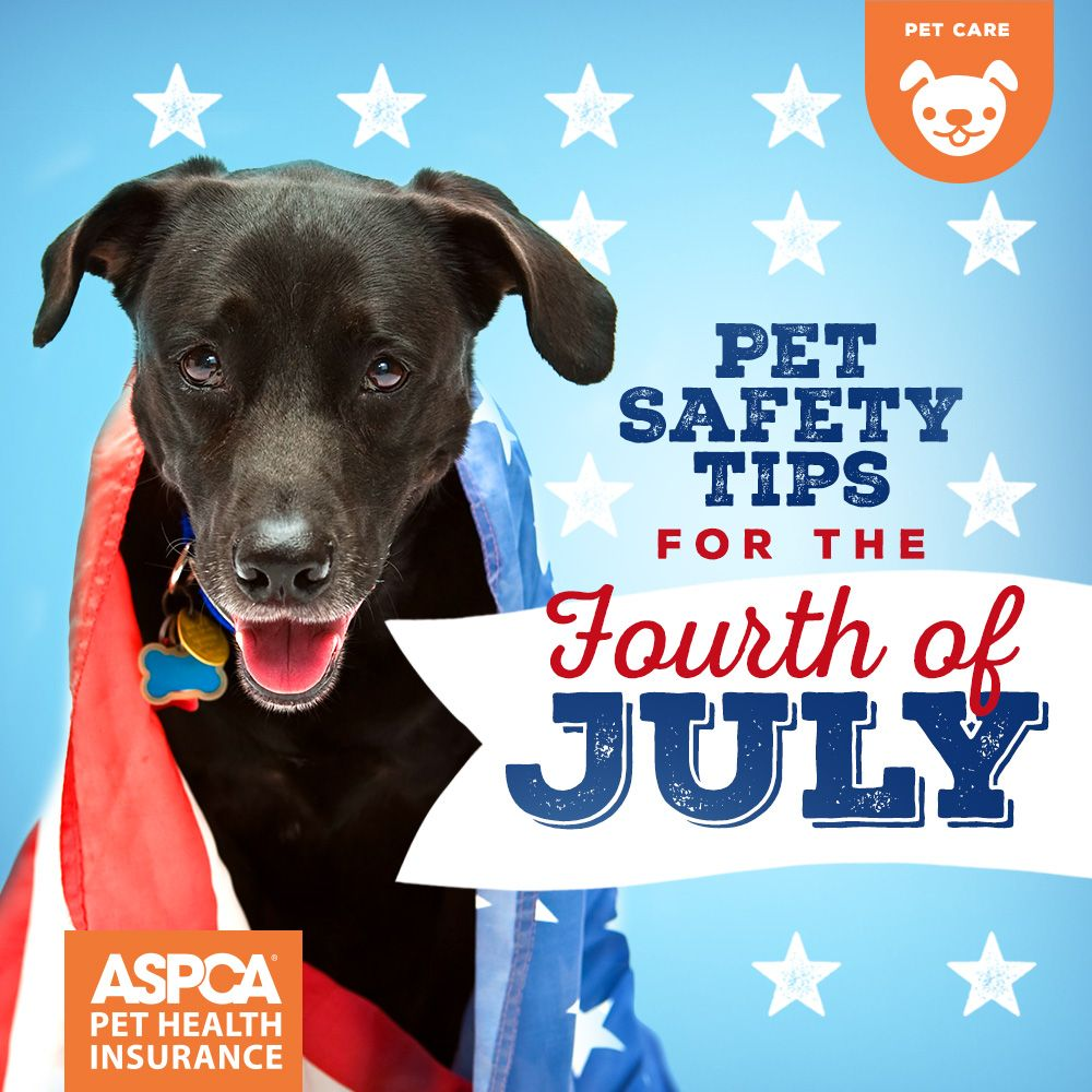 12 Pet Safety Tips for the Fourth of July Dog scared of