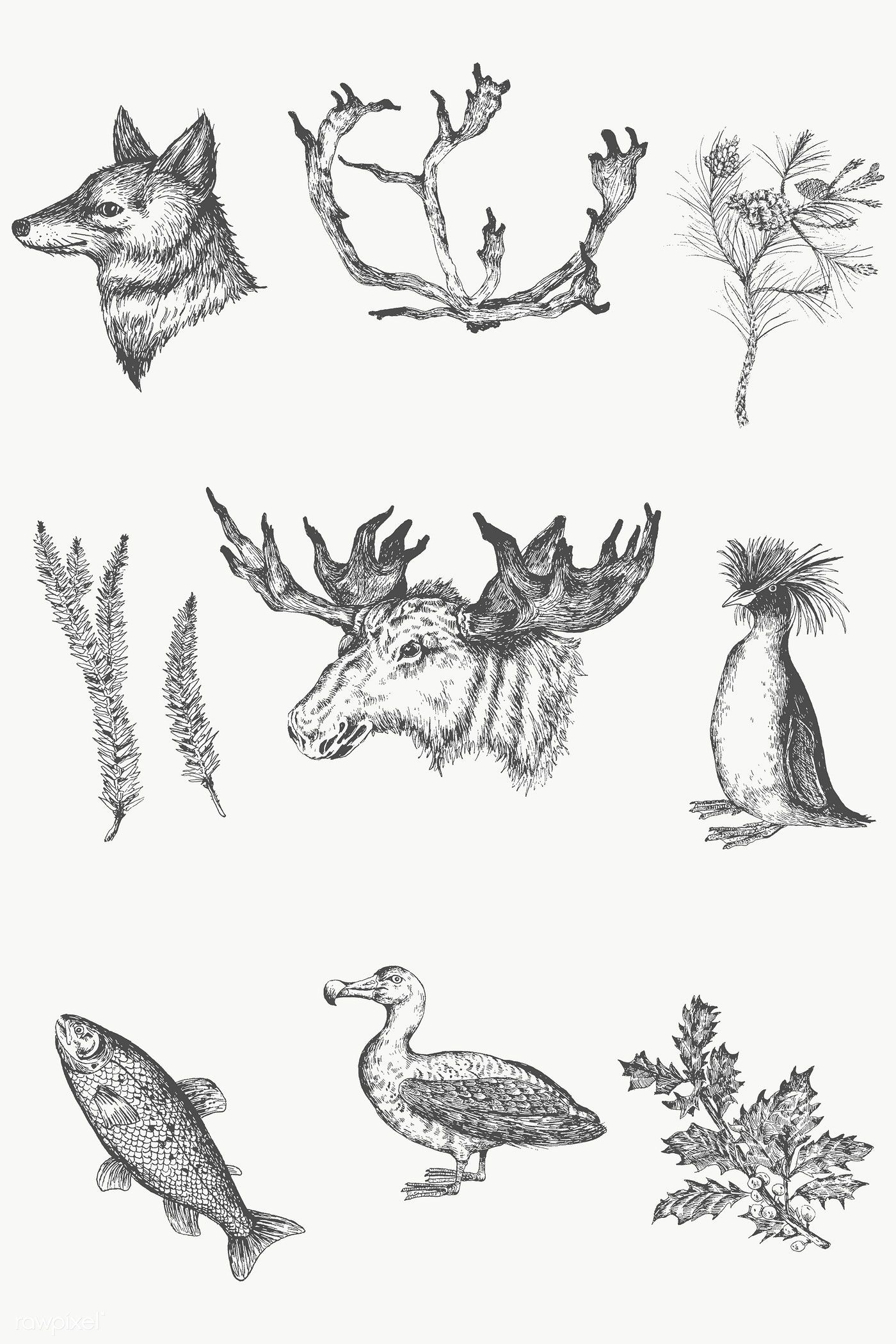 Download premium png of Animal drawing gray scale set